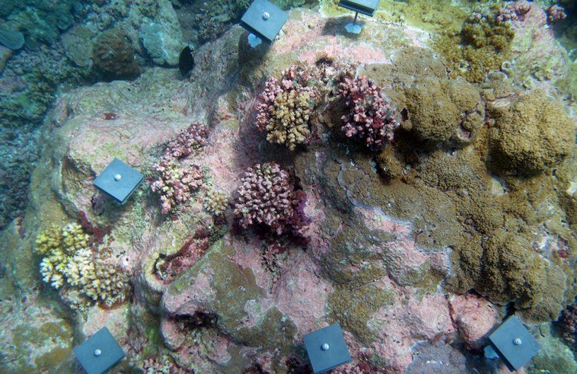 Távolodnak a korallok a trópusoktól