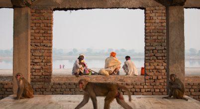 Emberek és majmok városa