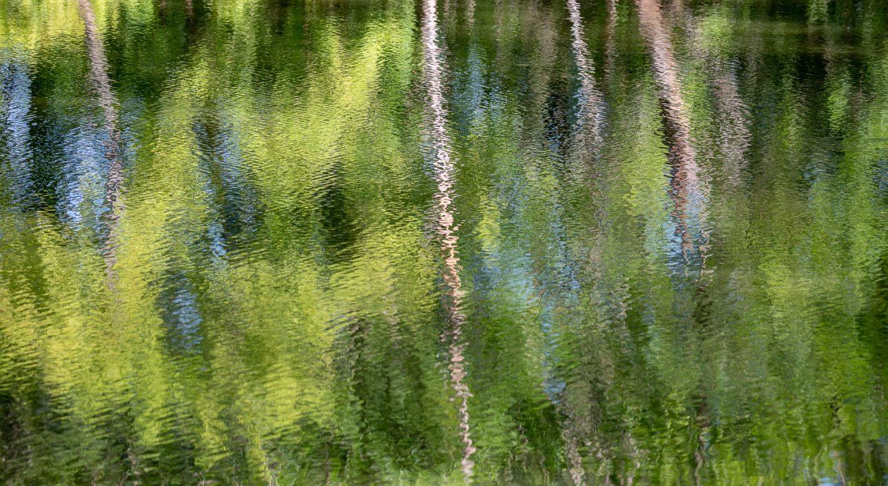A nap képe: Gemenci akvarell