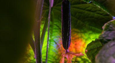 Növények termesztése a világűrben? Irány a Föld leghidegebb zuga!