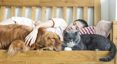 Házi kedvencekkel küzdhetünk a stressz ellen