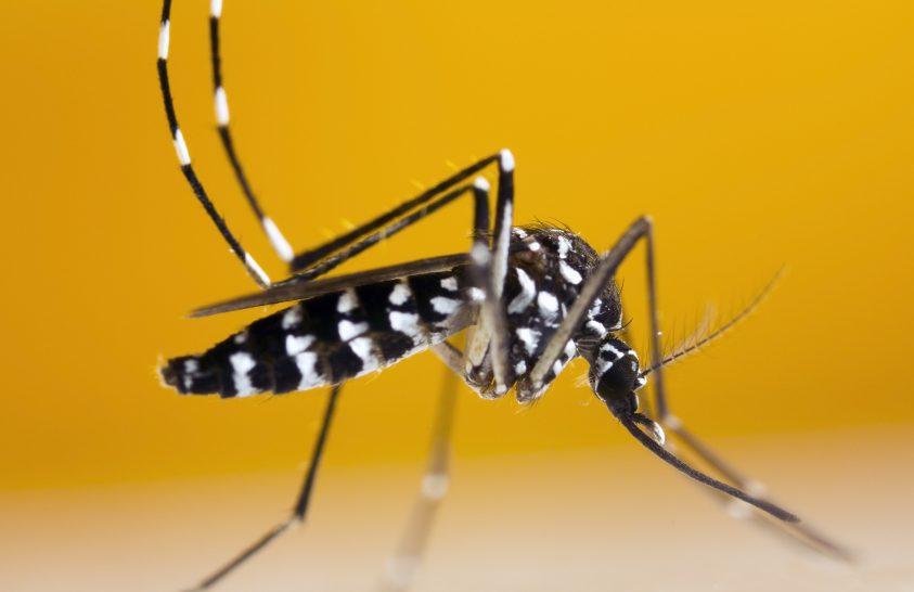 Tigrisszúnyogok felmérésében a lakosság segítségére is számítanak a kutatók
