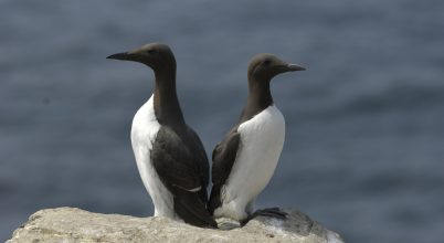 A madarak nehezen alkalmazkodnak a klímaváltozáshoz