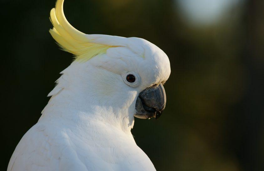 Magától tanult meg táncolni a kivételes papagáj
