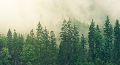 Erdőkkel kell teletelepíteni a bolygót, ha le akarjuk győzni a klímaváltozást