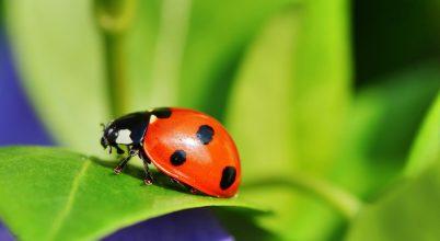 A környezettől függ a biológiai védekezés hatása
