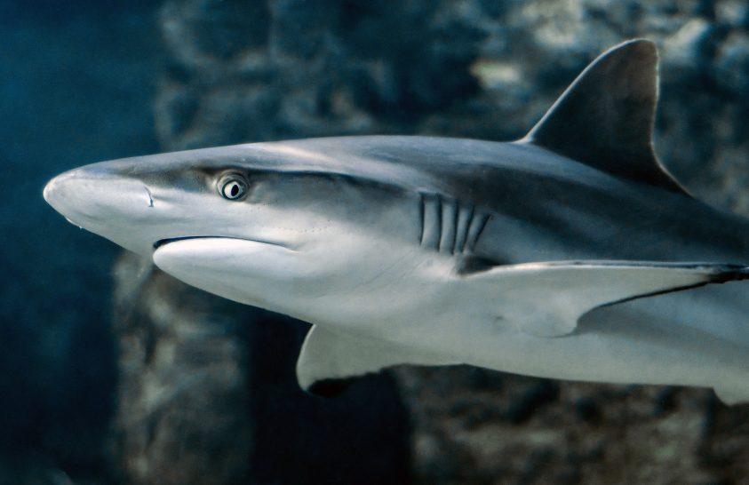 Cápákat és rájákat gyilkol a műanyag