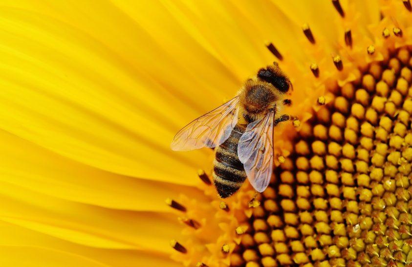 Méhbaráttá alakul egy holland város