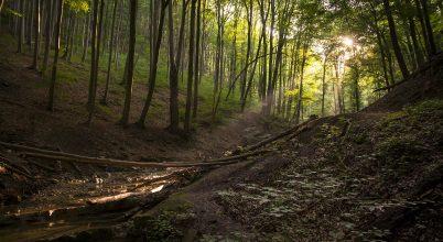 Az erdő mélyén