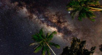 Egy este a dzsungelben