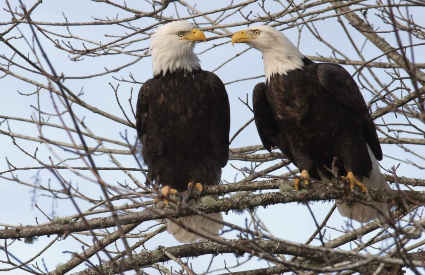 Veszélyben az amerikai veszélyeztetett fajok