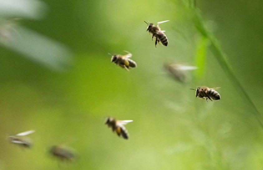 Méhpusztulás Brazíliában