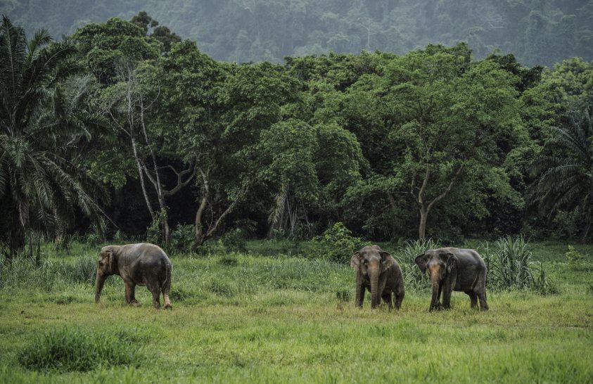 Egyre kevesebb gerinces állat él az erdőben