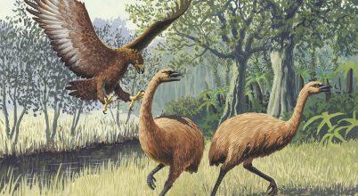 Milyen gyorsan nyerhető vissza a fajok sokfélesége?