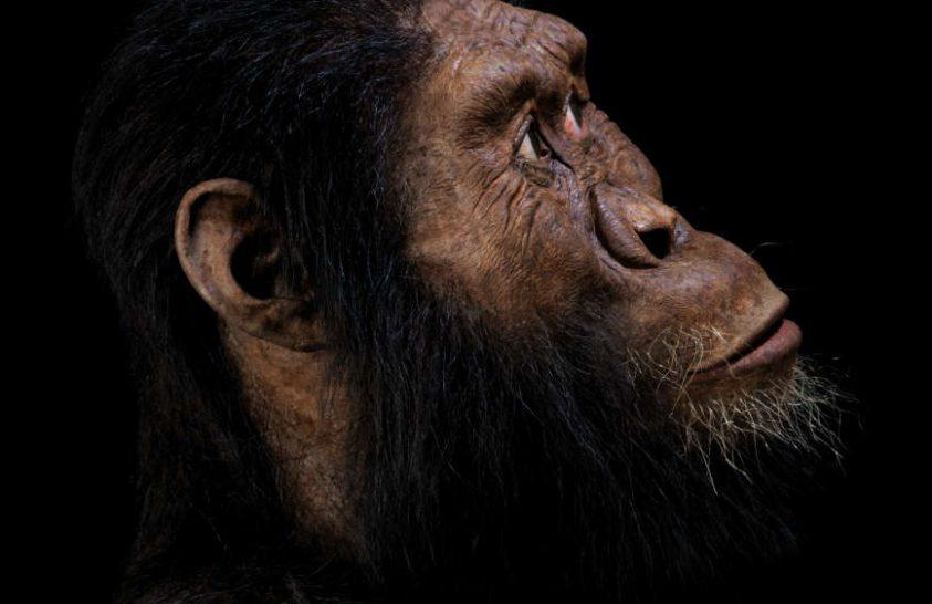 Ősi rokonunk arcát rekonstruálták
