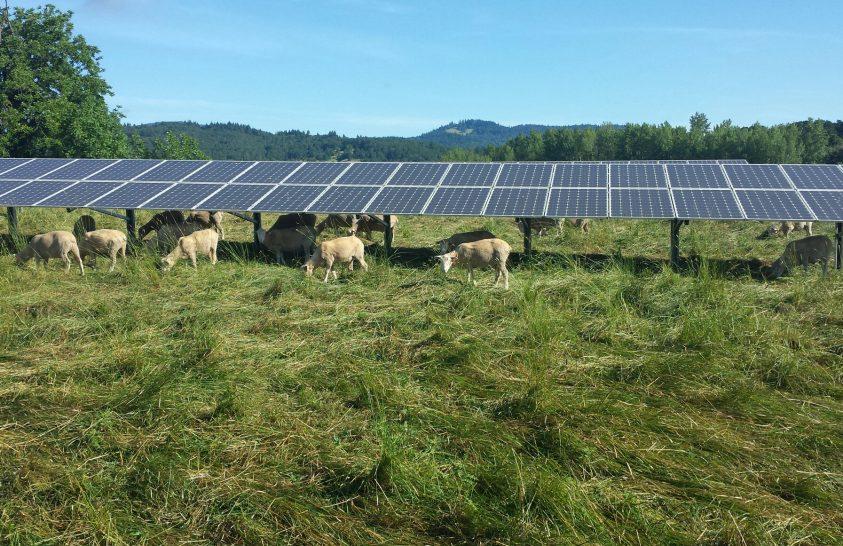 Hatékonyabbak a napelemek a szántóföldeken