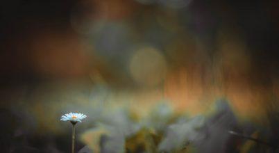 A nap képe: Őszi magány