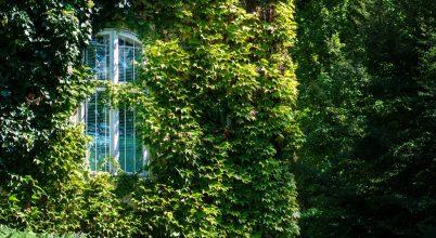 Zöld ablak
