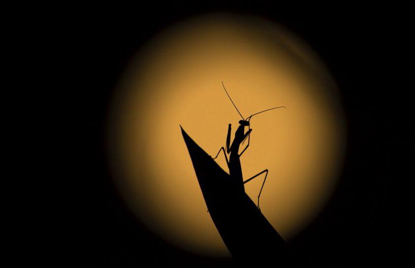 A nap képe: Holdfényben