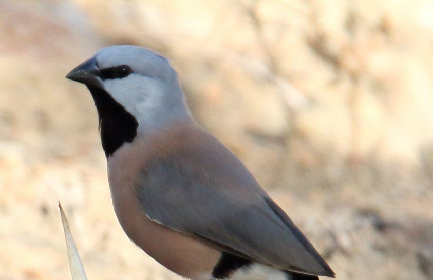Diákok próbálják megvédeni a veszélyeztetett madarat