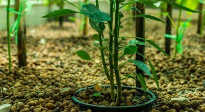 Aquapónia, avagy vízben növő zöldségek