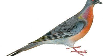 Egyre kevesebb a madár Észak-Amerikában