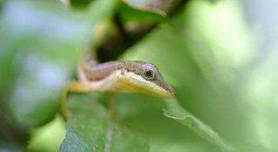 Ízelítő Costa Rica őserdejéből