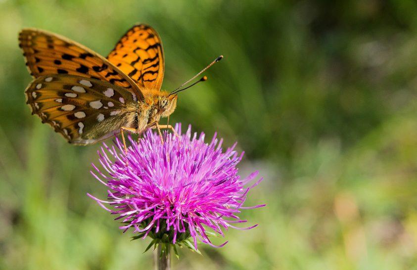 Nagyszabású rovarvédelmi kampány indul Németországban