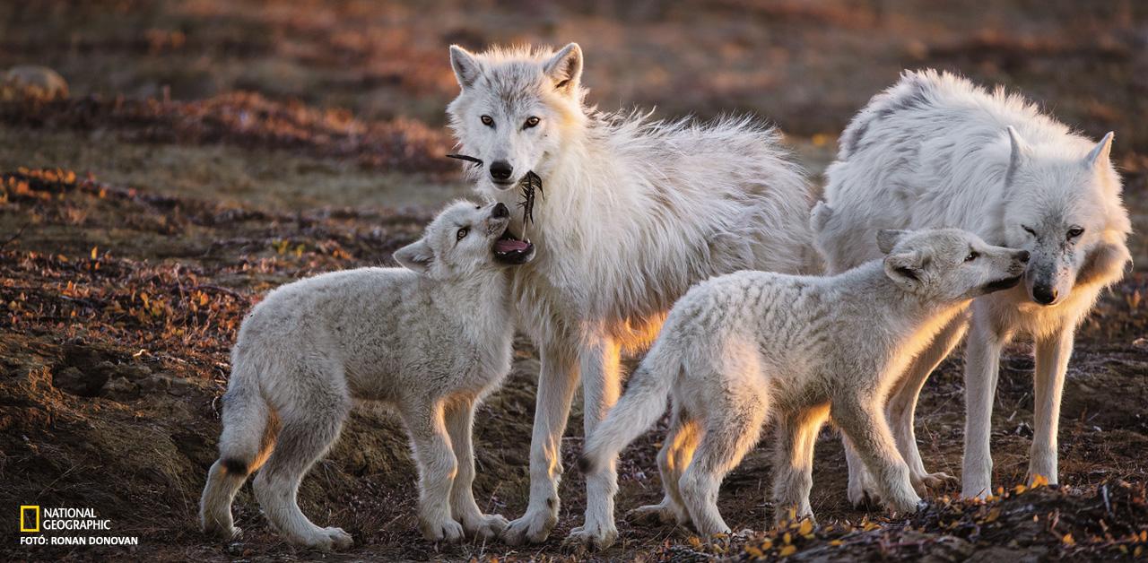 Legnagyobb fehér farkukat