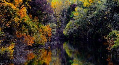 őszi tükör