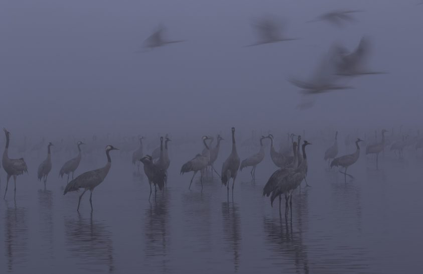 A nap képe: Darvak a ködben