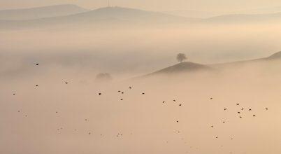 A nap képe: Kimagasló vackor