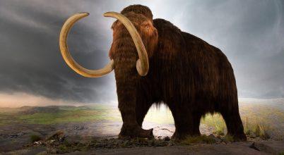 Miről árulkodnak az utolsó mamutcsoport csontjai?