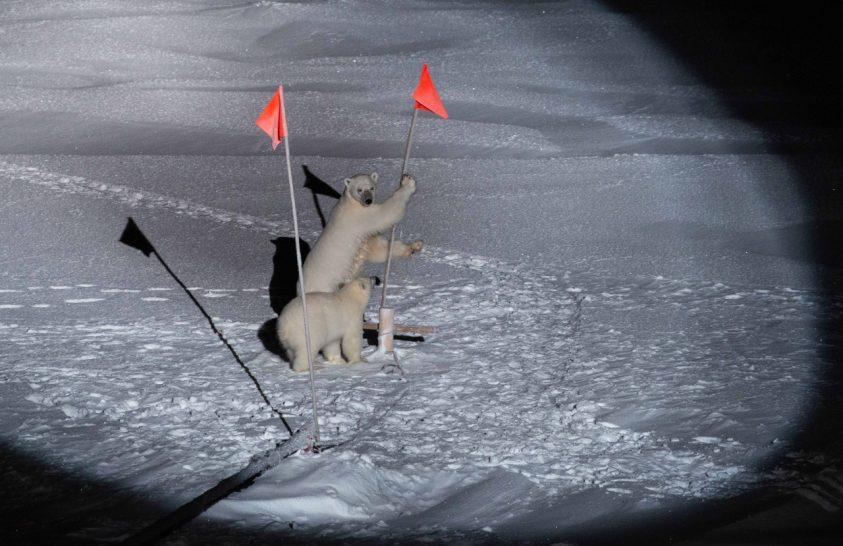 Merre jár a Polarstern?
