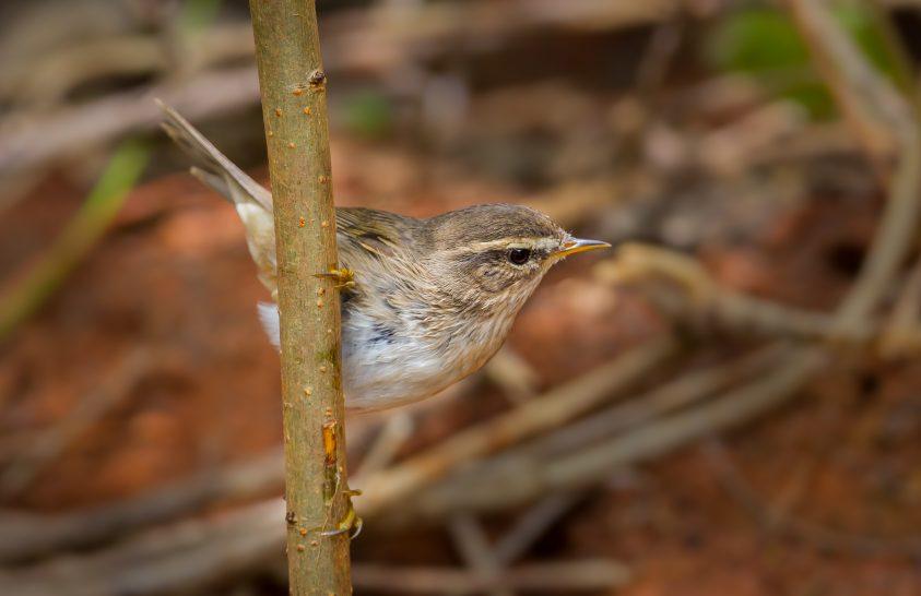 Ritka madárkincsre bukkantak Nógrád megyében