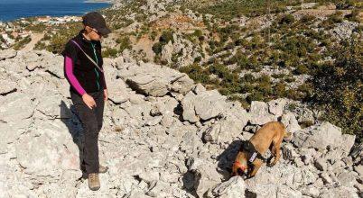 Kutyák segítenek a régészeti feltárásokban