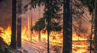 Géllel védhetnénk az erdőket a tüzektől