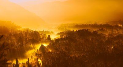 Az illegális vadászat az erdőirtásnál is károsabb lehet