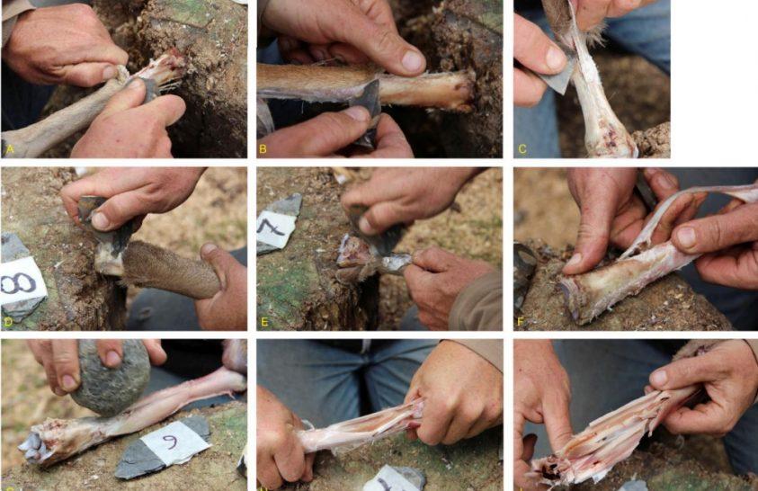 Csontvelő lehetett az ősember leveskonzervje