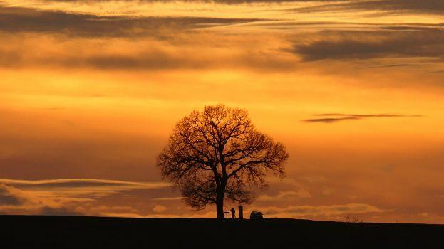 A nap képe: Nagyfa