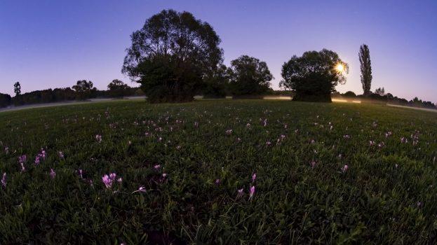 A nap képe: Őszi álom