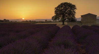 A nap képe: Provance-i naplemente