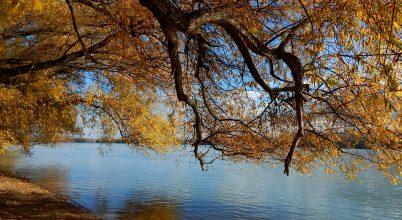 Dunaparti ősz