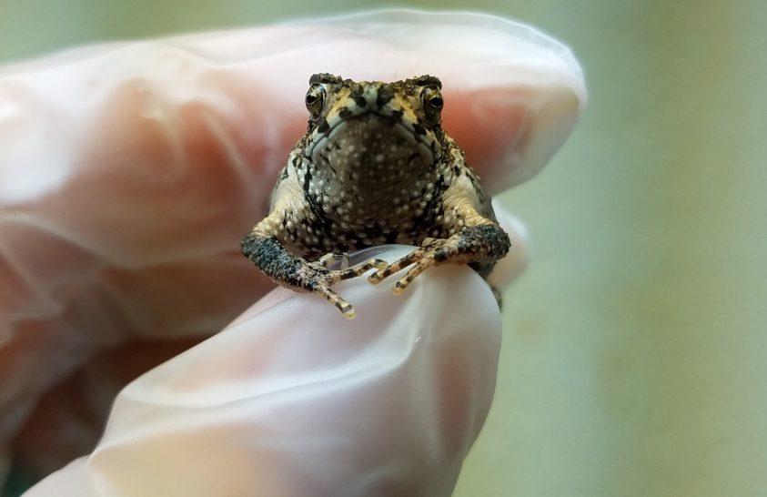 Lombikbéka született egy texasi állatkertben