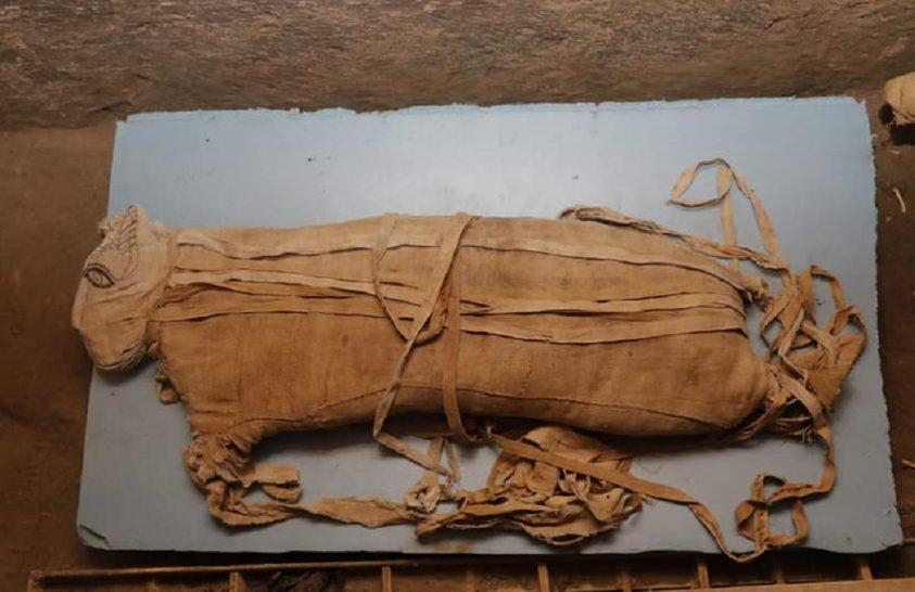 Oroszlánok múmiái kerültek elő Egyiptomban