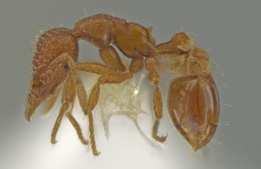 Saját kertjében fedezett fel új fajt egy rovarász