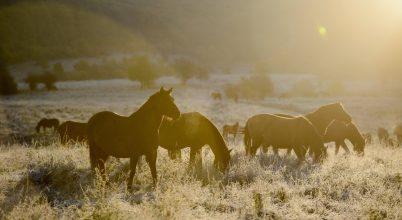 Aggteleki Nemzeti Park képekben