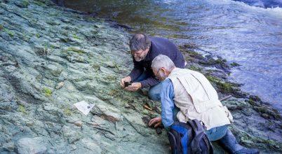 Feleségéről nevezte el a kutató az új-zélandi ősmadarat