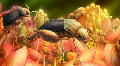 99 millió éves a rovarbeporzás legkorábbi bizonyítéka