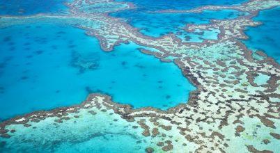 Eldobható műanyagok betiltása a Nagy-korallzátony védelmében